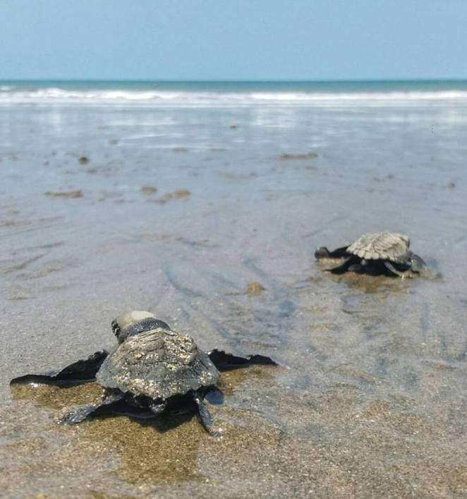 turtles final 2